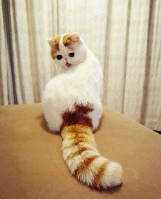 gato - Pesquisa Google