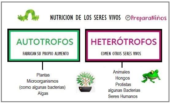 Diferencia Entre Autótrofos Y Heterótrofos Para Niños Autotrofos Y Heterotrofos Apuntes De Clase Cuadernos Interactivos De Ciencias
