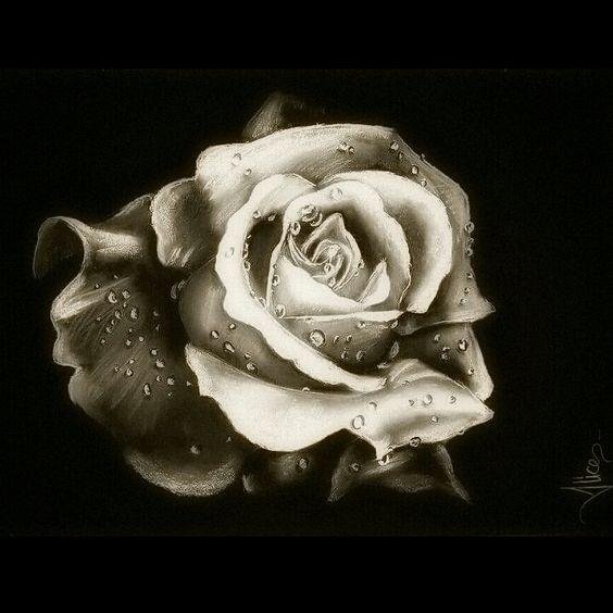 Disegno di una rosa con rugiada. Tecnica: gessetto e carboncino su cartoncino. (50X70)