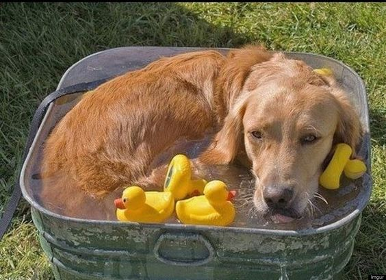 Cool Dogs: 30 Dogs Cooling Off (PHOTOS)