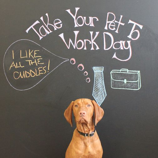 office pet ideas. To Celebrate Take Your Pet Work Day, We Asked Our Office Pets What Their Favourite Part Of Coming Is! Ideas C