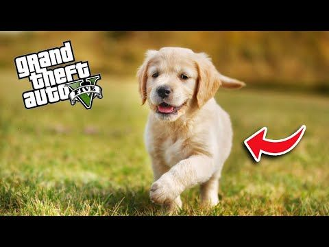 Furkan Yaman Gta 5 Youtube Grand Theft Auto Gercekler Hayat