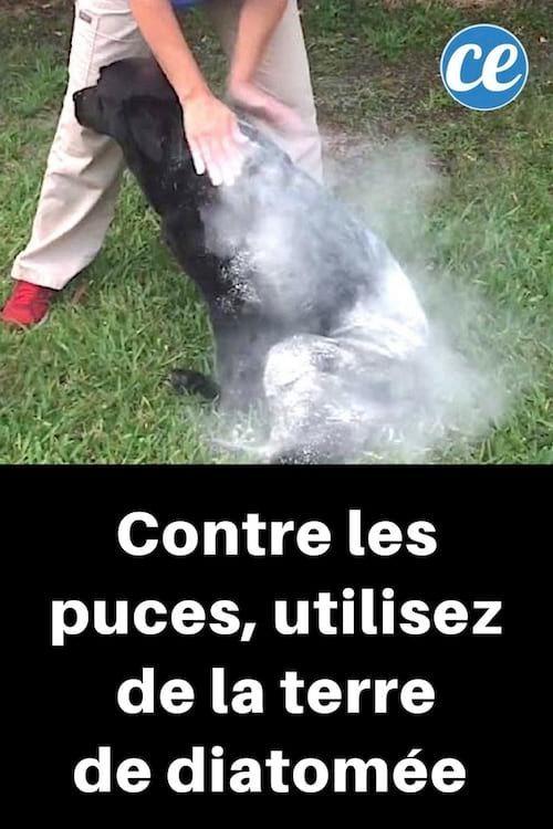 Comprimé Anti Puce Et Tique Pour Chien Epingle Sur Animaux