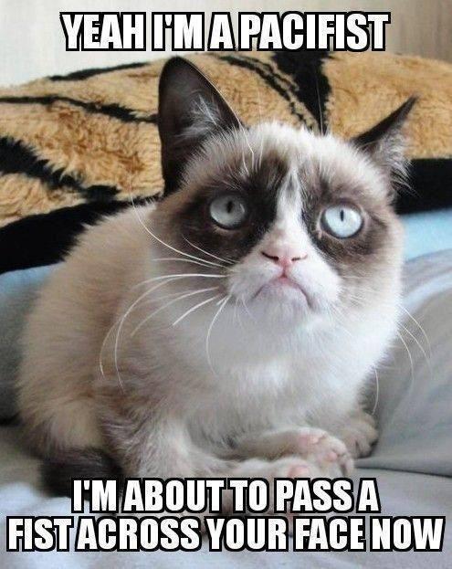 Cat Meme Of The Decade Funny Grumpy Cat Memes Funny Cat Memes Grumpy Cat Meme