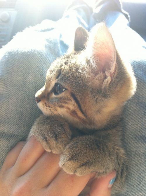 前足を揃えた子猫の横顔