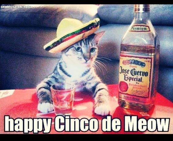 Feliz 5 de Mayo!