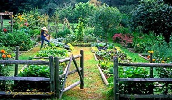 4 manieren om Monsanto uit uw eigen tuin te houden