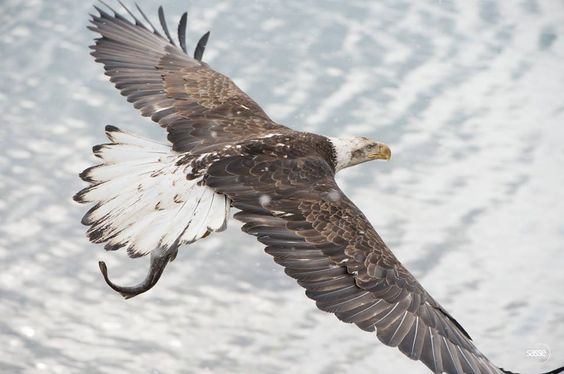 Flying above an Eagle