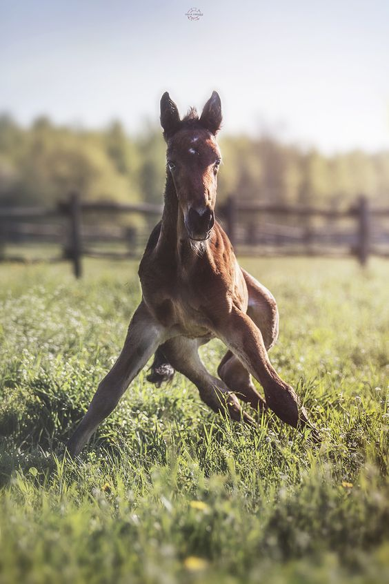 First steps - A foal bred by Le Fontanette