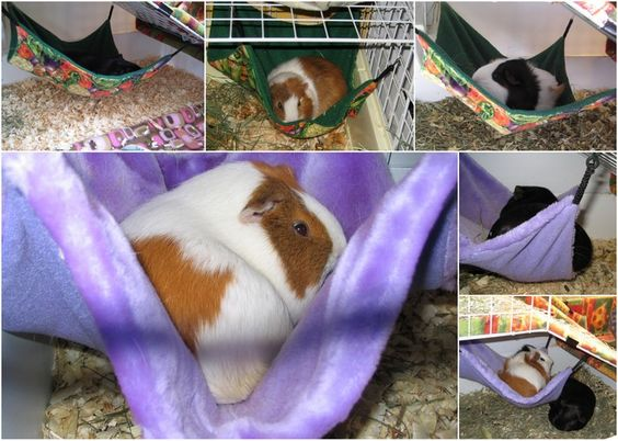Crafts, Cavies and Cooking: Guinea Pig Hammocks