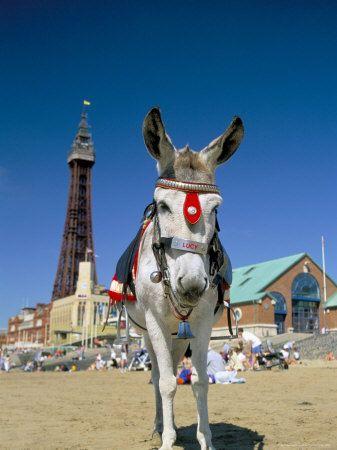 A donkey ride on the beach!  Blackpool, Lancashire, England