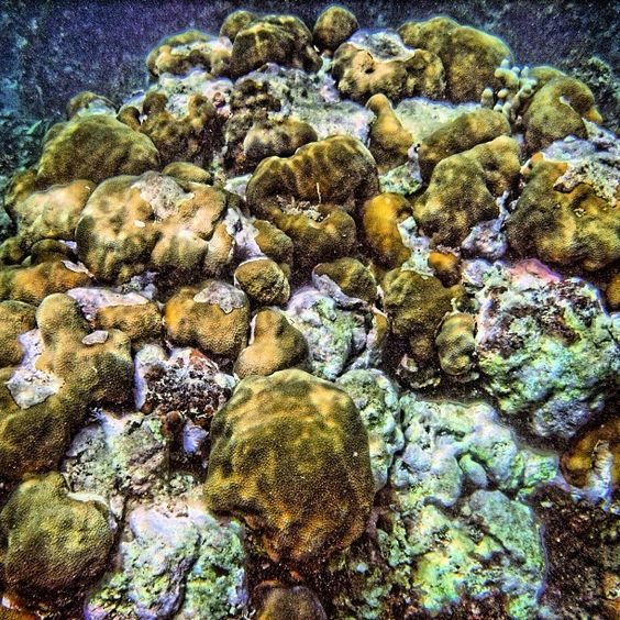 Visit the Jamaica Photo Gallery at Scuba Dive Jamaica for more great photos like this cluster of coral reef. Follow us on Instagram for more great pictures!