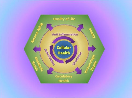 What you feed your cells WILL determine your opportunity for OPTIMAL Health