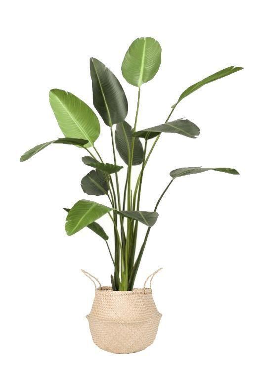 Large Artificial Strelitzia Plant 6ft Artificialplantsoutdoorhouse Artificial Plants Artificial Plant Arrangements Small Artificial Plants