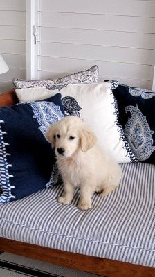 I Know I M Not Suppose To Be Up Here With These Ralph Somebody Pillows But There Soft Golden Retriever White Blue And White Dog Bed