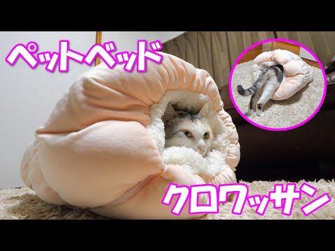 寒くなって来たのでネコ吉にペットベッドクロワッサンをプレゼントしました Youtube ペットベッド ペット ネコ
