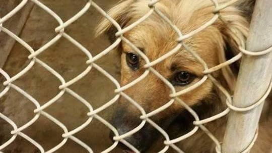 ASK BIG SPRING TX POLICE DEPARTMENT TO STOP KILLING SHELTER ANIMALS WHEN MANY KENNELS ARE EMPTY AND TO GIVE THEM SUITABLE BED/BLANKET TO LAY ON INSTEAD OF FLOOR https://www.change.org/p/larry-mclellan-mayor-council-member-carmen-harbour-council-member-justin-myers-ask-big-spring-tx-police-department-to-stop-killing-shelter-animals-when-many-kennels-are-empty-and-to-give-them-suitable-bed-blanket-to-lay-on-instead-of-floor