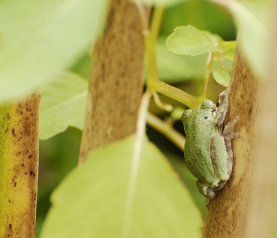 Tree Frog   Endless Wildlife