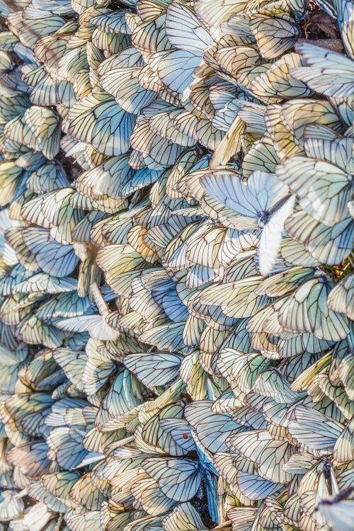 Weisse Schmetterlinge Strukturen Muster Inspiration Strukturen Muster Inspiration Muster Schmetterlinge Muster In Der Natur Kunst Ideen Blaue Kunst