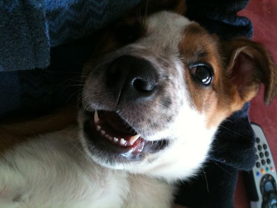 • Finn; mutt, 2-6 months, new zealand // © Nicole Hanson [credit must remain!]