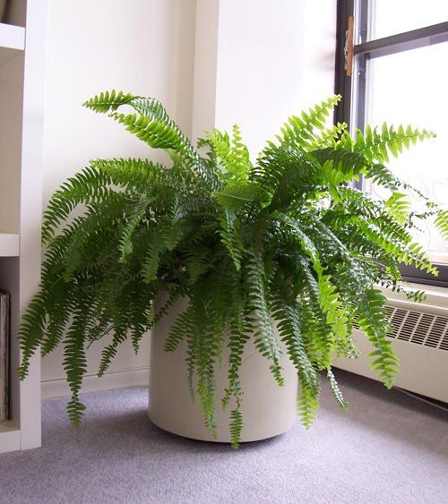 Summer prblems and how to solve them. These plants that will absorb excess humidity in your house - Cleaning-Ideas.com