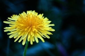 yellow flower by kay