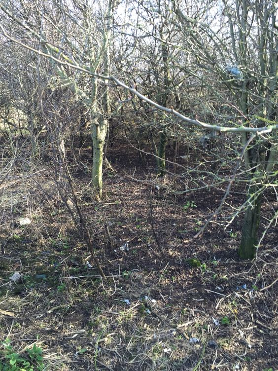 Coatham Marsh Clean up March 2015