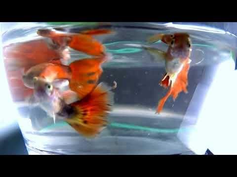 Ideasaquarium Sharkfish Tanksaquarium Nailsfish Decoration Filterfish Childrenaquarium Plantsfish Diyfish Goldfishf Guppy Fish Aquarium Fish Tank Aquarium Fish