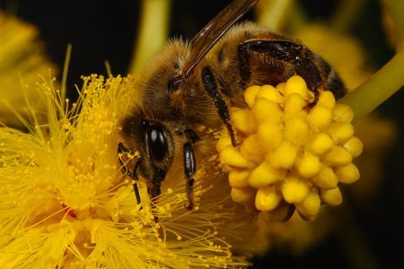 Busy bee Photo by Dariusz Kutyna — National Geographic Your Shot