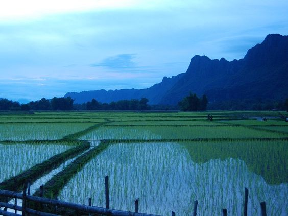 PHOTO OF THE WEEK (7/1/12): Peaks and Paddies, Southern Laos. Photo courtesy of Cindy Fan