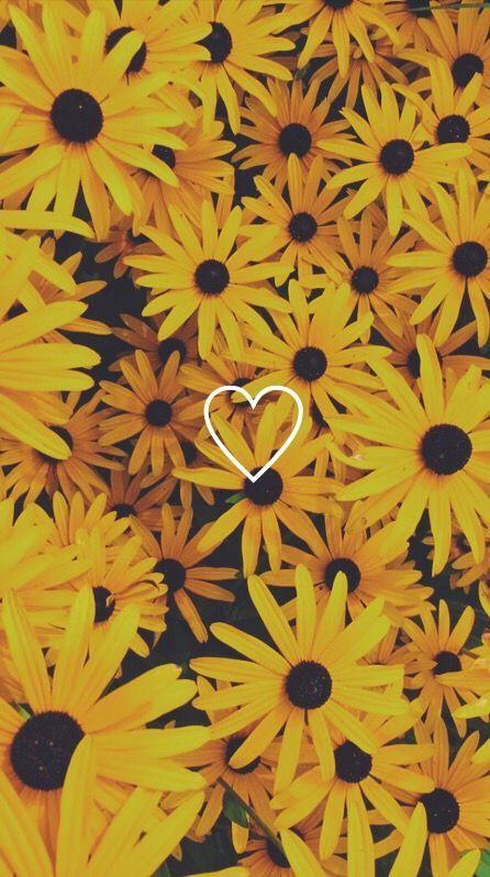Yellow Aesthetic Sunflower Heart Wallpapers Aestheticwallpaper Wallpaper Iphone Summer Aesthetic Iphone Wallpaper Backgrounds Phone Wallpapers