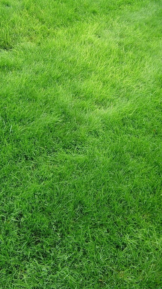 Iphone 6 Wallpapers 1080p Full Ultra Hd Pinofy Net Grass Wallpaper Green Wallpaper Grass Textures