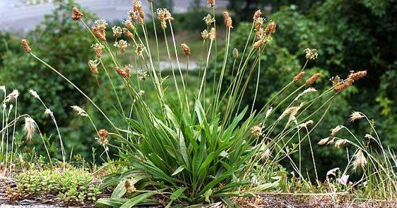 schmackhaftes aus feld und flur wildpflanzen im mai. Black Bedroom Furniture Sets. Home Design Ideas