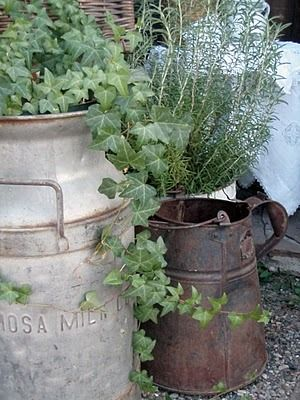 In the novel Shabby Chic After All, Julia plants in all sorts of vintage containers. www.kirstenfullmer.com