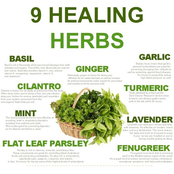herbs and spices and their uses pdf free