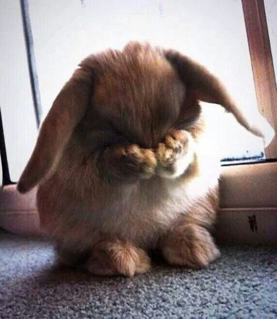 It'll be ok, Bunny.