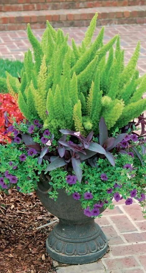 Clippedonissuu From Container Gardening For All Seasons Enjoy Year Round Color Wi Container Gardening Flowers Garden Containers Container Gardening Vegetables