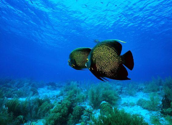 Pin by alex bazhan on undersea world pinterest publicscrutiny Images