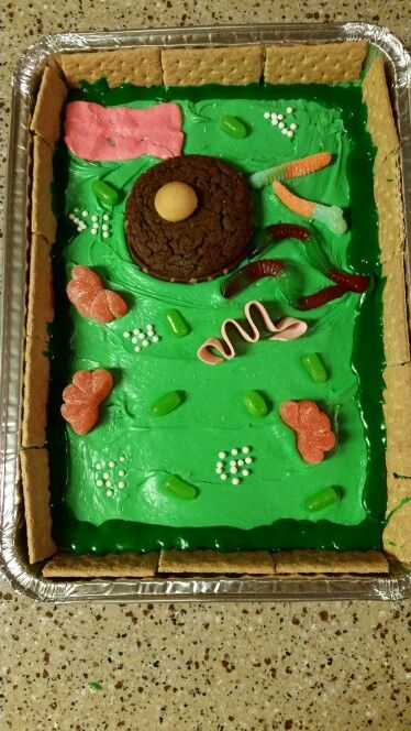 how to make an edible plant cell