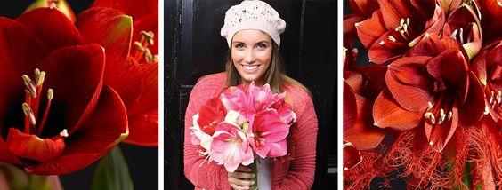 Flower Export News Amaryllis Flower Pitch