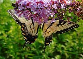 natural beauty of nature - Google Search