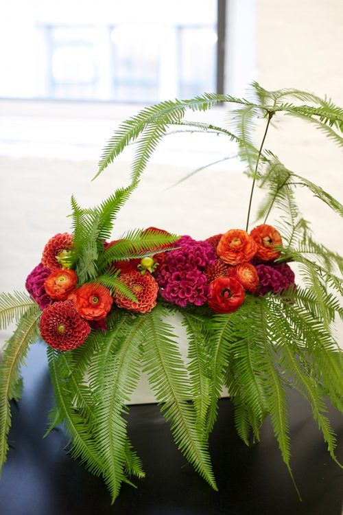 Ferns and zinnas and . . .