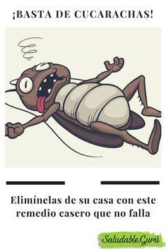 Basta De Cucarachas Elimínelas De Su Casa Con Este Remedio Casero Que No Falla Saludable Salud Cucaracha Insecto Cleaning Hacks Homemade Remedies Caseros