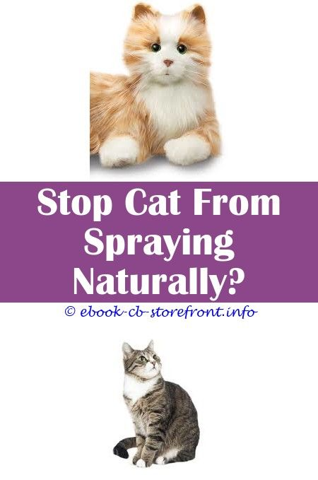 10 Worthy Ideas How Do I Get My Cat To Stop Spraying Cat Head Spray Female Cats Spraying Problems Cat Litter Attractant Spray Spray For Cat Marking Admirable