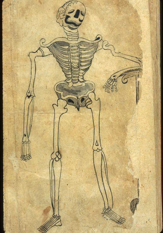 Ilustración anatómica persa de Irán o Pakistán (1680-1750)