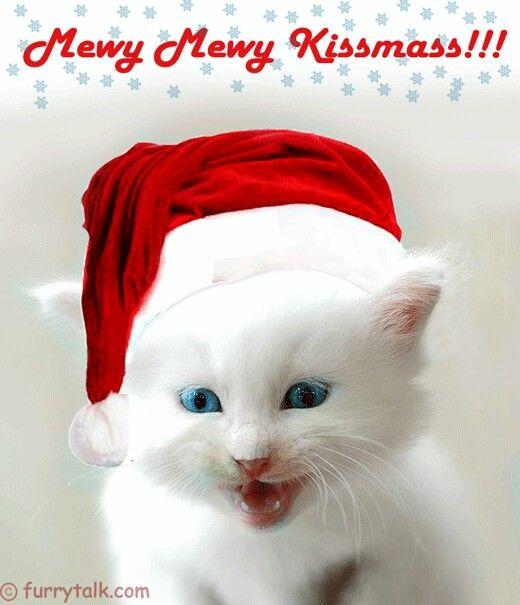 Cats Way Of Saying Merry Christmas Christmas Images