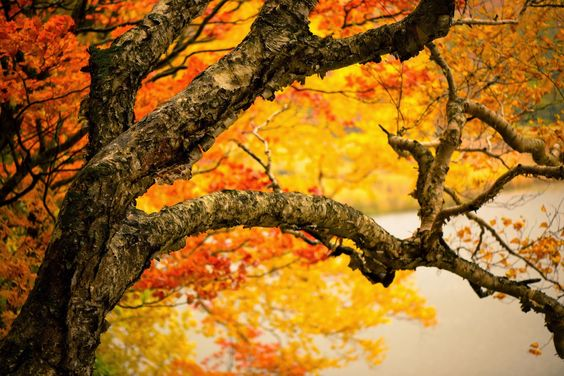 дерево ствол - Pesquisa Google