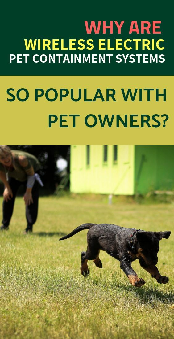 Why Are Wireless Electric Pet Containment Systems So Popular With
