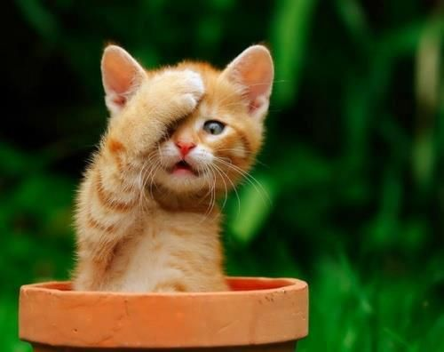 Little kitten forgot something - Follow the pic for more awww
