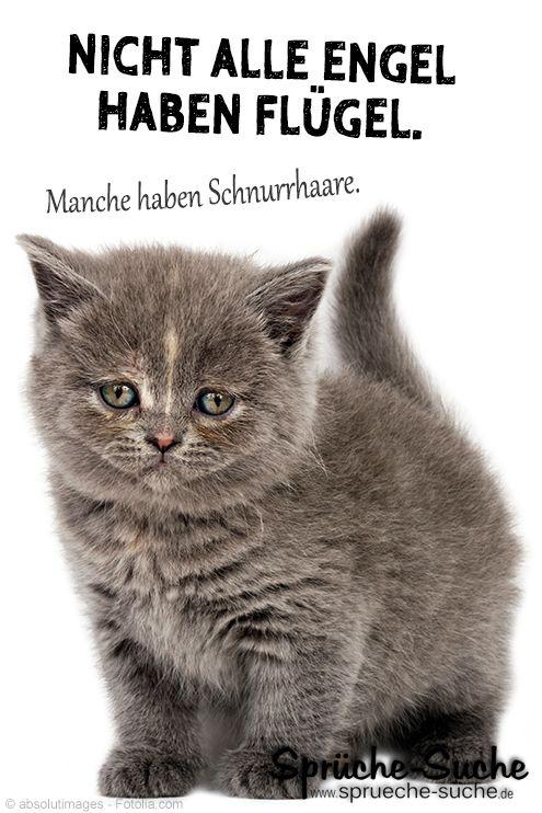 Nicht Alle Engel Haben Flugel Spruche Katze Baby Katzen Und